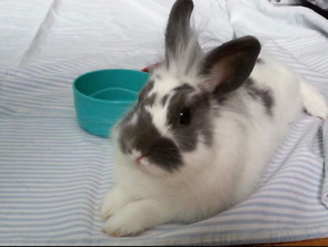 Loving rabbit in need of a new home.