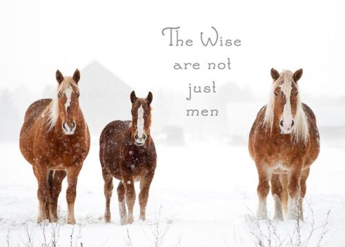 The Wise are not just men Belgian Horse Christmas Cards