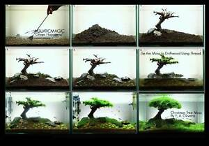 Xmas-Moss-live-aquarium-plant-decoration-package-co2-flame-java-fish-tank-R3