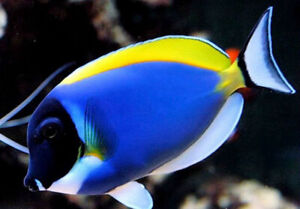 Saltwater Fish New arrival and Specials