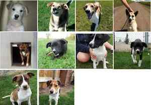 OLD MACDONALD DOG RESCUE-PONOKA-ALSO LOST & FOUND ANIMALS