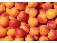 Sprawling Chalet /Apricot Farm/Tourist Project-Caspe Spain