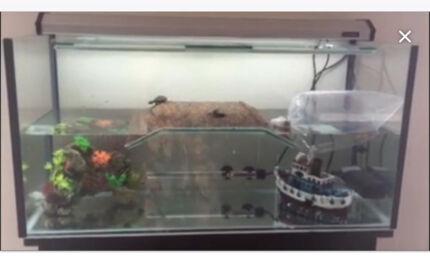 Turtle Tank set up