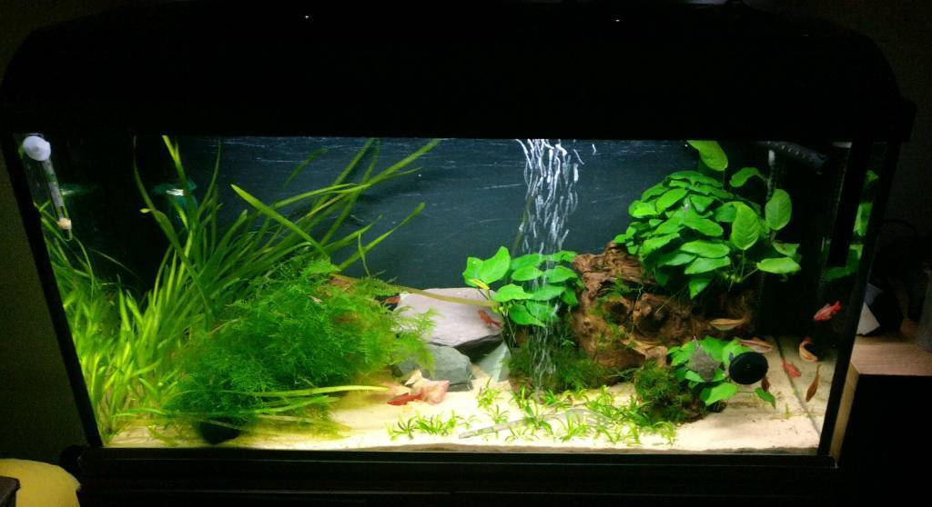 2 fish tanks & fish for sale