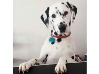 Dog Groomer / Mobile Dog Groomer