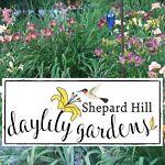 Shepard Hill Daylily Gardens