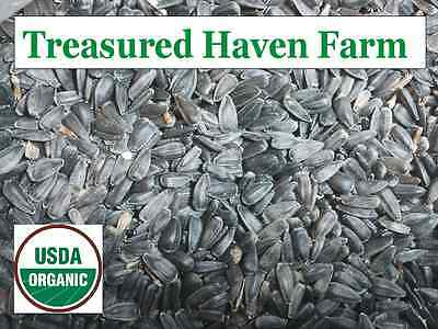 ORGANIC 1 Pound Black Oil SUNFLOWER SEED - bird feed - Treasured Haven Farm