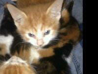Cutest kittens for sale