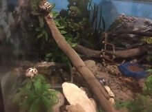 Hermit crabs and enclosure Dundowran Fraser Coast Preview