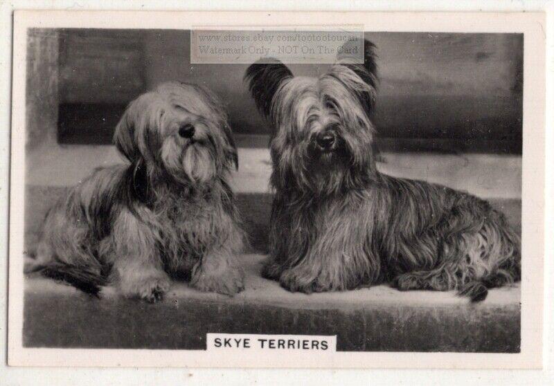 Skye Terrier Dog Canine Pet Animal 1930s Trade Ad Card