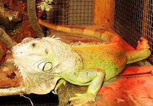 Niagara Exotic Animal Sanctuary - Reptiles, Sm. Mammals & Birds