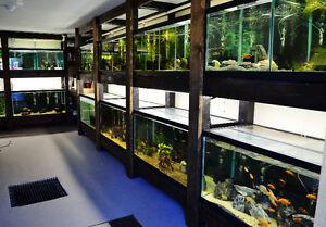 home based fish store 4 years running!
