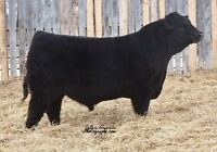 DOUBLE 'F' CATTLE CO. 7TH ANNUAL BULL SALE