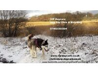 We are a family run business offering a flexible and personal dog sitting service for your VIP