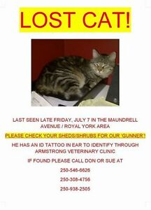 Lost Cat - Royal York/Tim Hortons in Armstrong