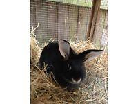 Gorgeous Female Rabbit