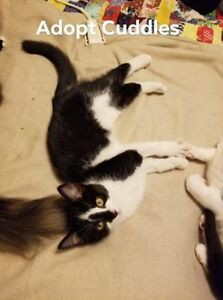 Cuddles and Dagwood need a home together