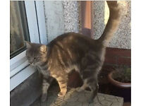 Cat Lost in Armagh City