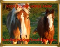 riding lessons and horse boarding