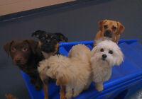 Home Environment Doggy Daycare