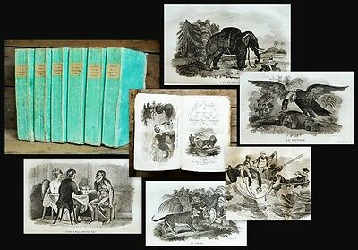 1821 65 plates with animals Smith Thomas Le cabinet du jeune naturaliste