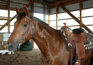 Reining Trained All 'Rounder - Beginner Friendly