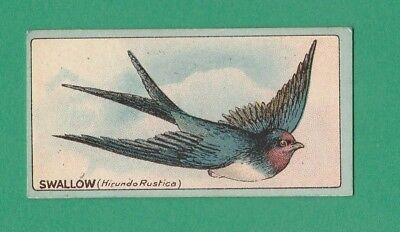 BIRDS  -  R. J. LEA  -  ENGLISH  BIRDS  -  SWALLOW  -  1922 for sale  Shipping to Ireland