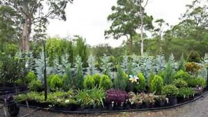 Horsehoe Drive Plant Nursery TRADE & PUBLIC & Phone Orders Welcome Mudgeeraba Gold Coast South Preview