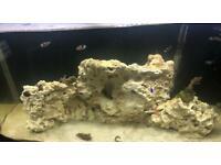165L Marine/Saltwater tank for sale