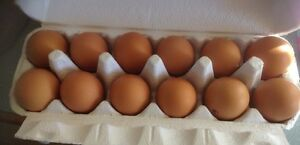 Fertile eggs mix from $20 per doz Joyner Pine Rivers Area Preview