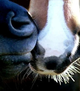 Equine First Aid Clinic