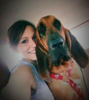 "Young Male Dog - Bloodhound: ""Leonard"""