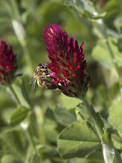 Pollinator Mix Wildlife Seed 2lb of Fresh 2017 Seed!