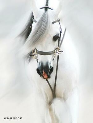 Art Print, Framed or Plaque By Kari Brooks - Dream Horse - KARI105 - Horses Dream Framed Art Print