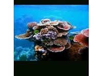 Marine corals etc wanted