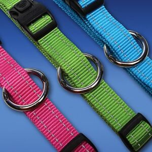 Dog Collar Rogz Beaumont Hills The Hills District Preview