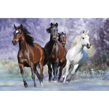 Poster galopperende paarden 61 x 91,5 cm - Posters