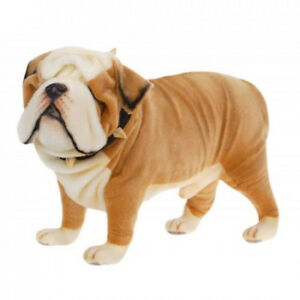Bulldog anglais (English Bulldog)
