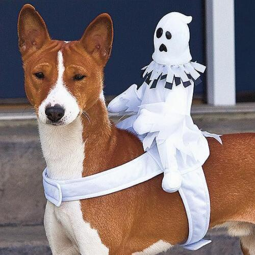 Halloween Dog Costumes Ride on Ghost