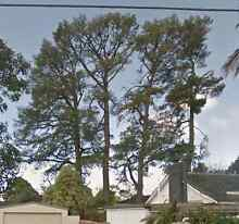 FREE pine logs FREE delivery - for firewood or milling Ringwood Maroondah Area Preview