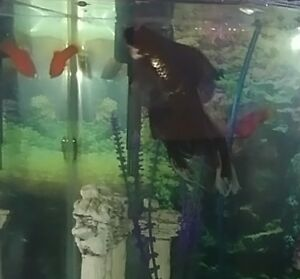 3 fish for rehoming