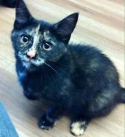 """Baby Female Cat - Tortoiseshell: """"margaret"""""""
