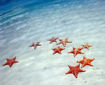 ThrowingStarfish