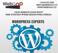 Are you looking to Hire a WordPress Expert?