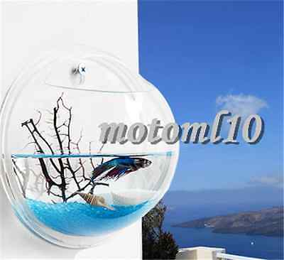 Creative Wall Mount Fish Bowl Acrylic Aquarium Tank Beta Goldfish Hanger Plant #