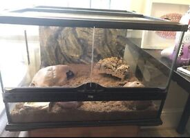Leopard gecko for sale to good home