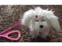 AniMagic Fluffy goes walkies