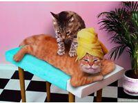 💖💖 Magic hands Swedish massage, English Therapist 💖💖
