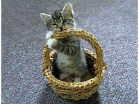 Stunning cross kittens