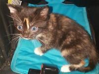 3x beautiful kittens